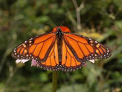 caterpillar or butterfly?